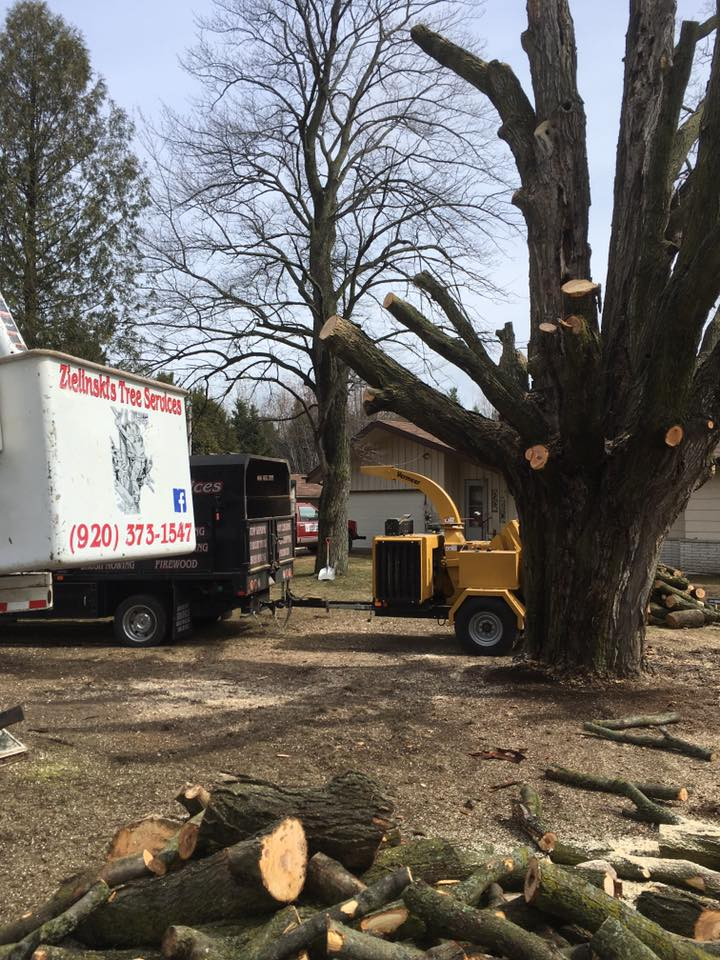 monster of a tree taken down in Oconto Falls- Zielinski Tree Services 2