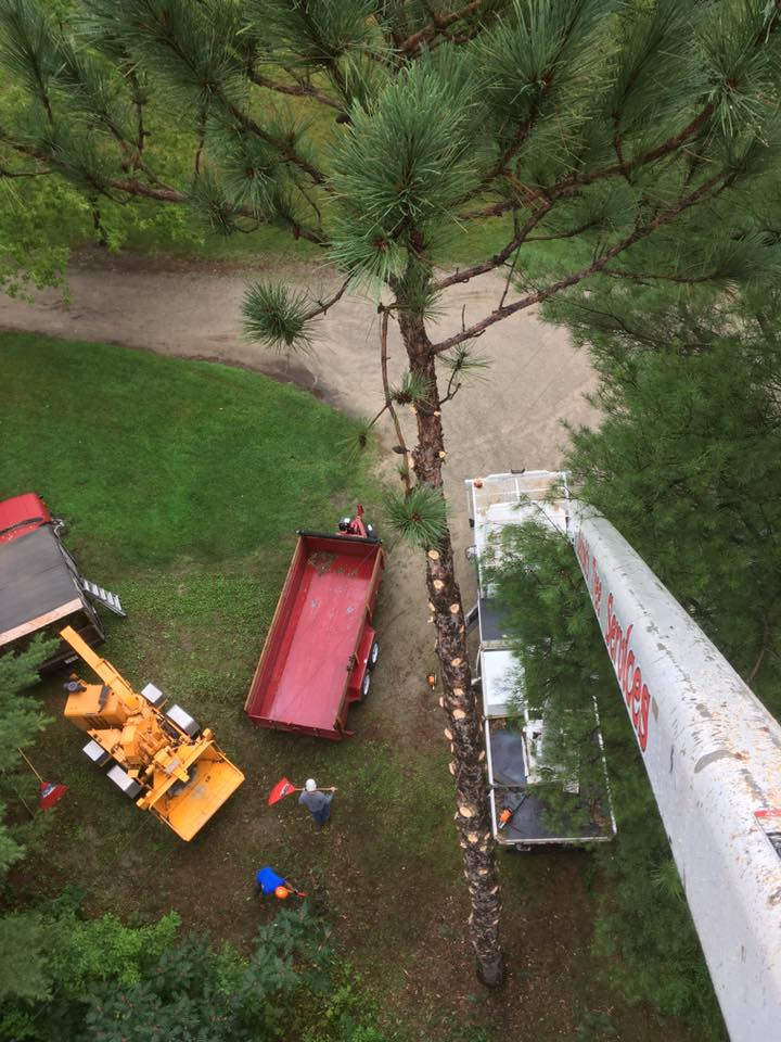 Tree removal project ariel view in Peshtigo Wisconsin