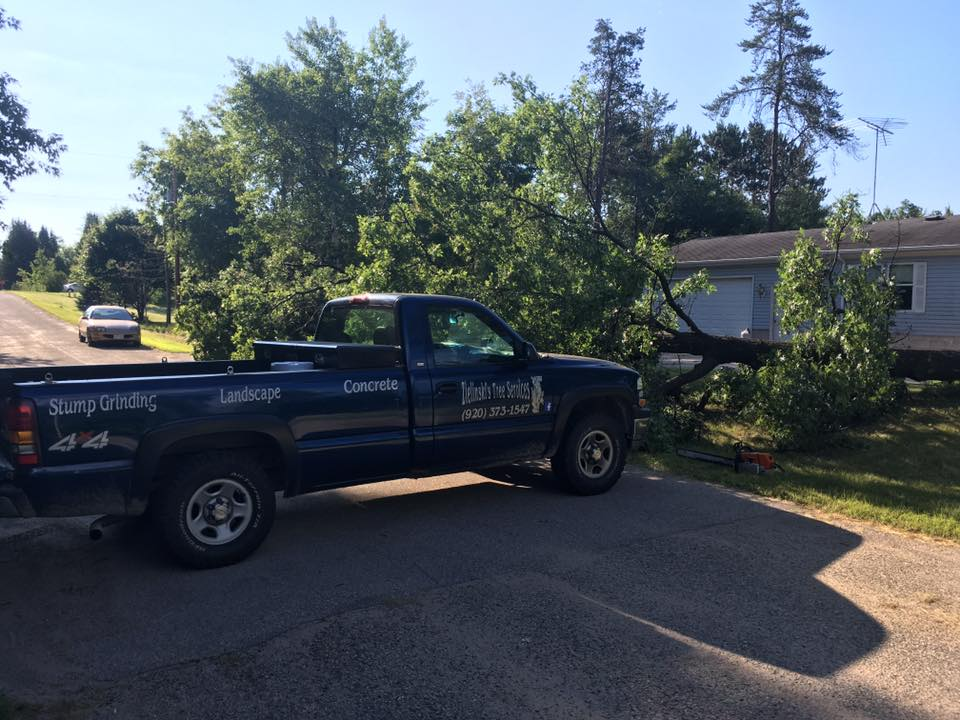 zielinski tree services on location in crivitz wi