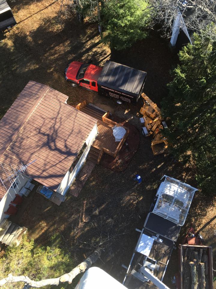 Squaw Lake tree service project arial view 2