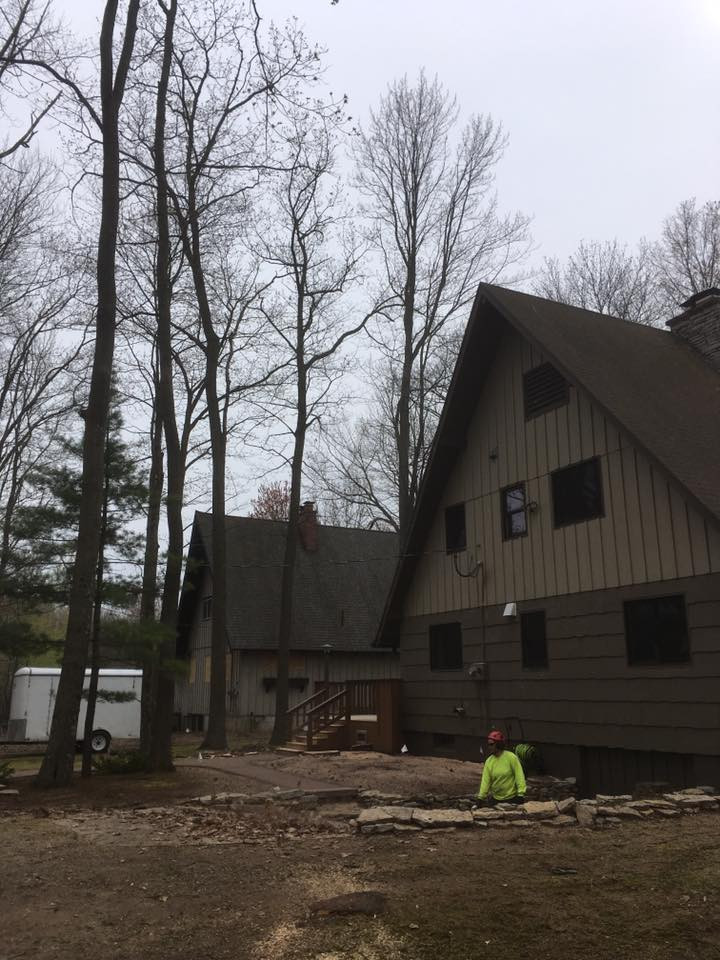 tree removal-stump grinding in white potato lake