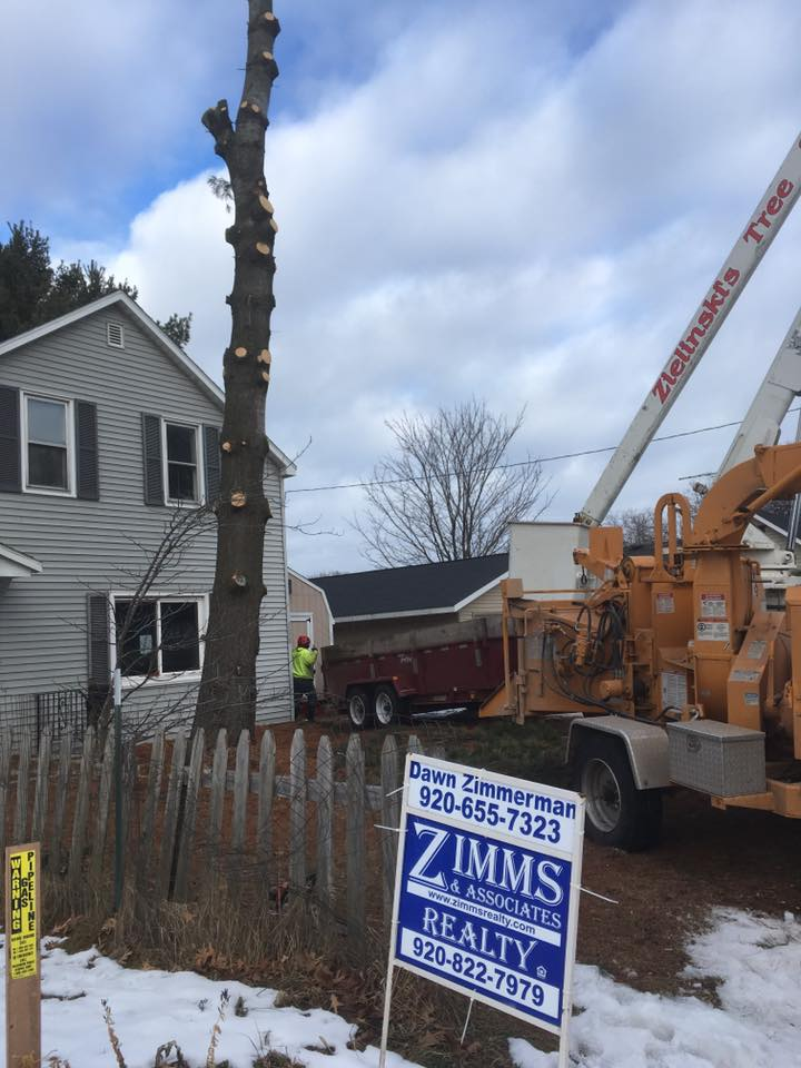 Oconto tree removal project