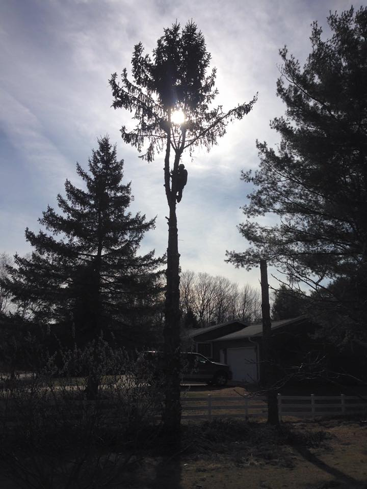 Oconto Falls Wisconsin Tre Service Project on county road I- Zielinskis tree services