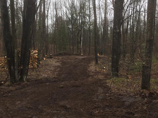 Lot Clearing at Shay Lake in Pound, Wisconsin