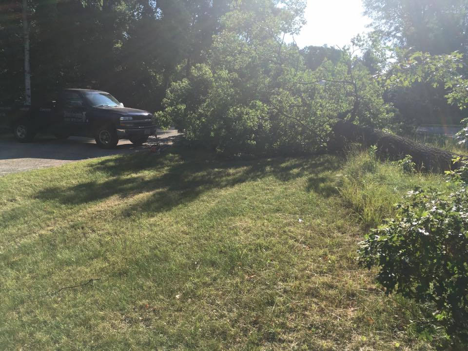 Tree removal in crivitz wisconsin