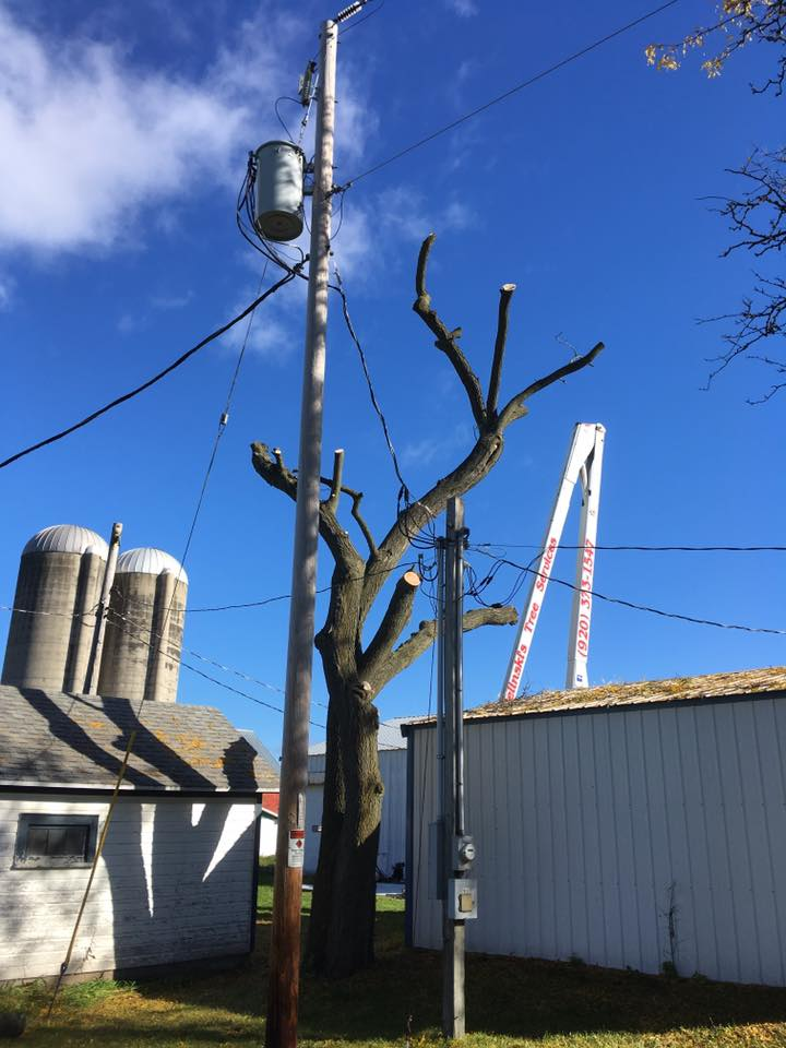 tree service project in oconto wisconsin