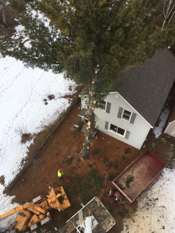 Oconto wisconsin tree removal project