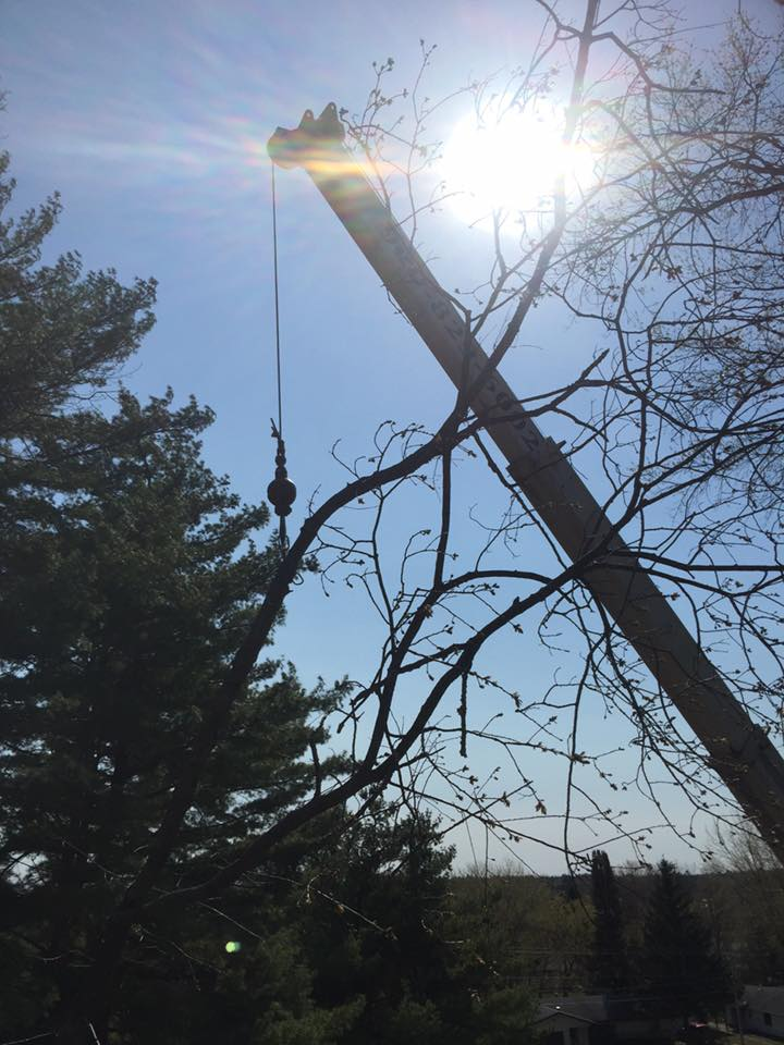 zielinski tree services on location oconto falls 2