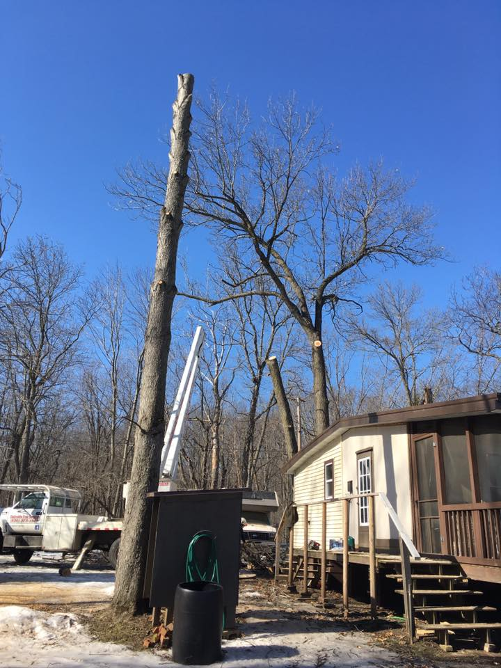 Portage Wisconsin Tree Removal Project