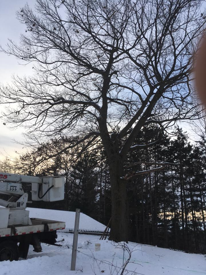 Tree service in crivitz wisconsin by zielinski tree services