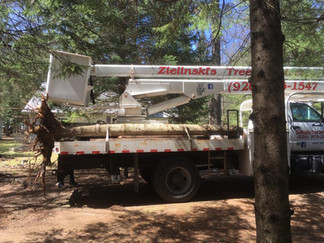 Total Tree Removal Project In Crivitz Wisconsin