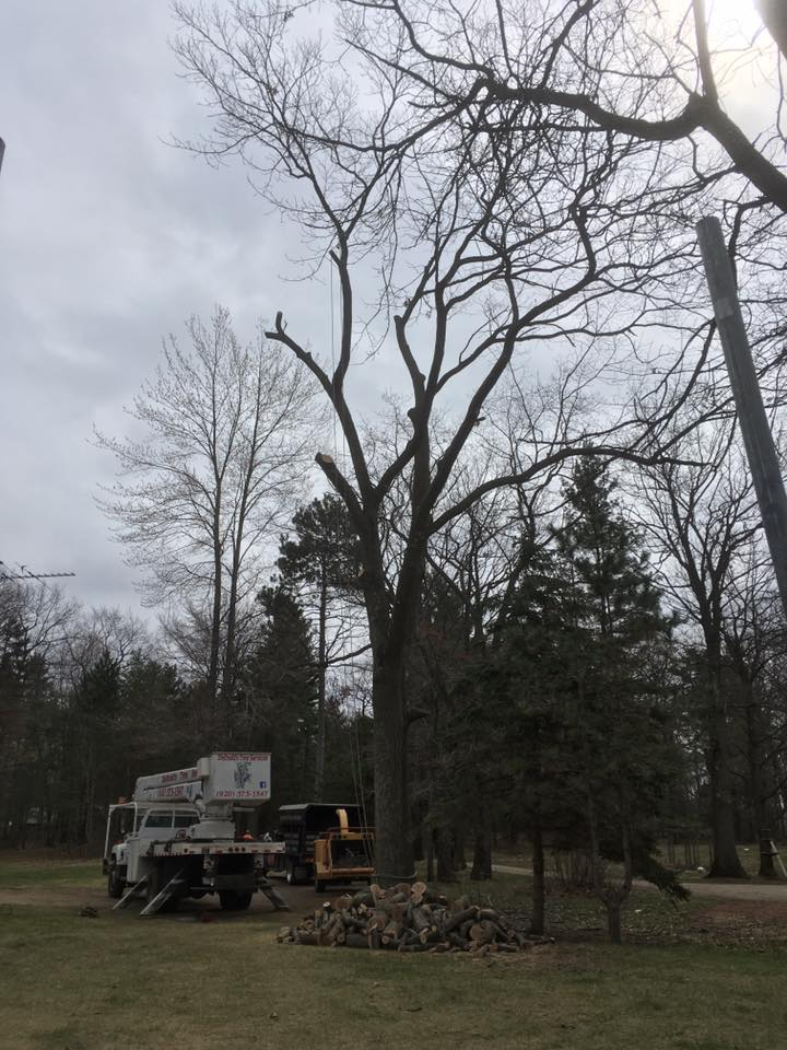 Menominee Michigan Tree Removal Project- Zielinskis Tree Services 1