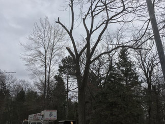 Menominee Michigan Tree Removal Project
