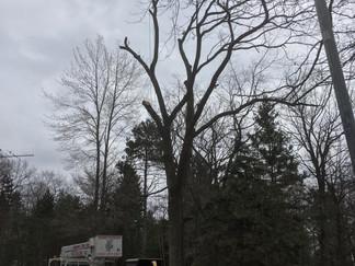 Menominee Michigan Tree Removal Project