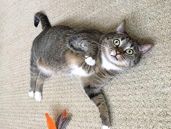 charlotte cat boarding