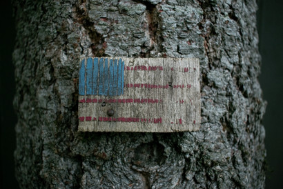 Tree again-6.jpg