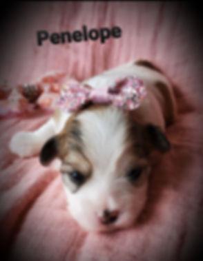 Penelope 7.jpg