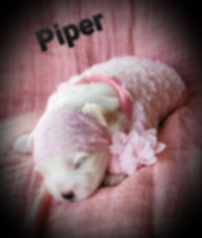 Piper 4.jpg