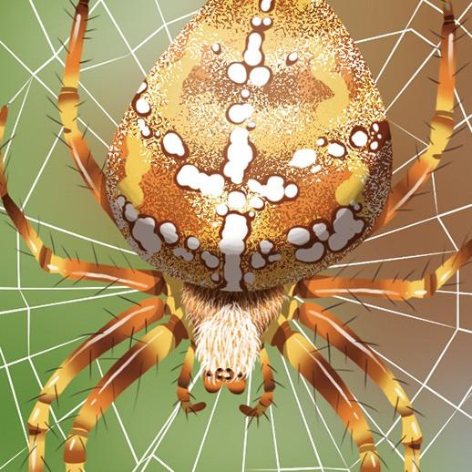wapiti   araignées