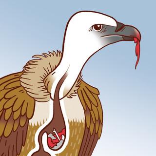 wapiti | vautours