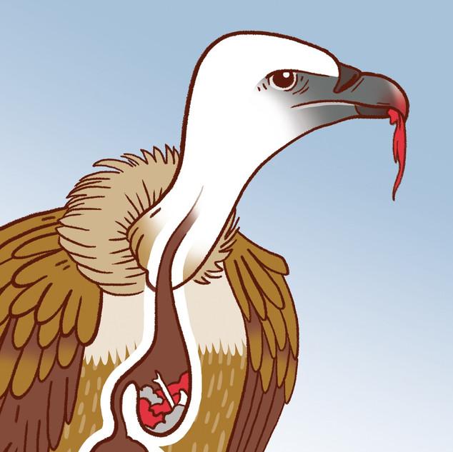 wapiti   vautours