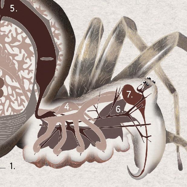éditions quae   fascinantes araignées