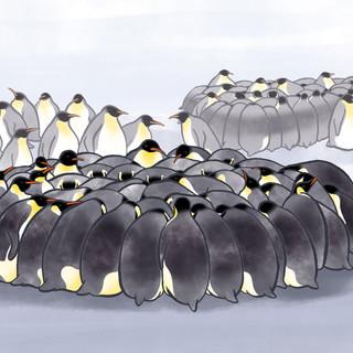 wapiti   colonies