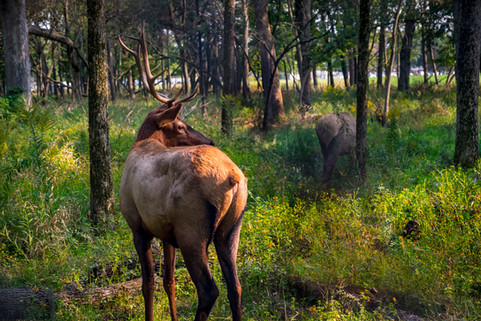 elk preserve_small-68.jpg