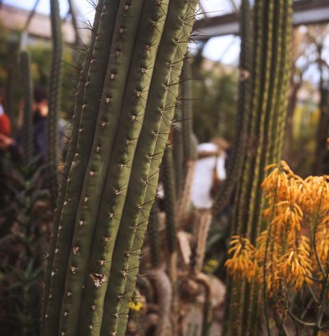 ektachrome botanic-gardens-web-182.jpg