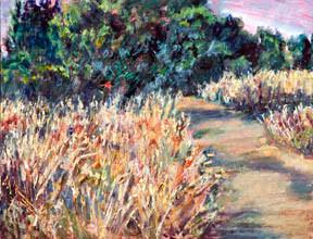 A grassy trail near Sebastopol, CA