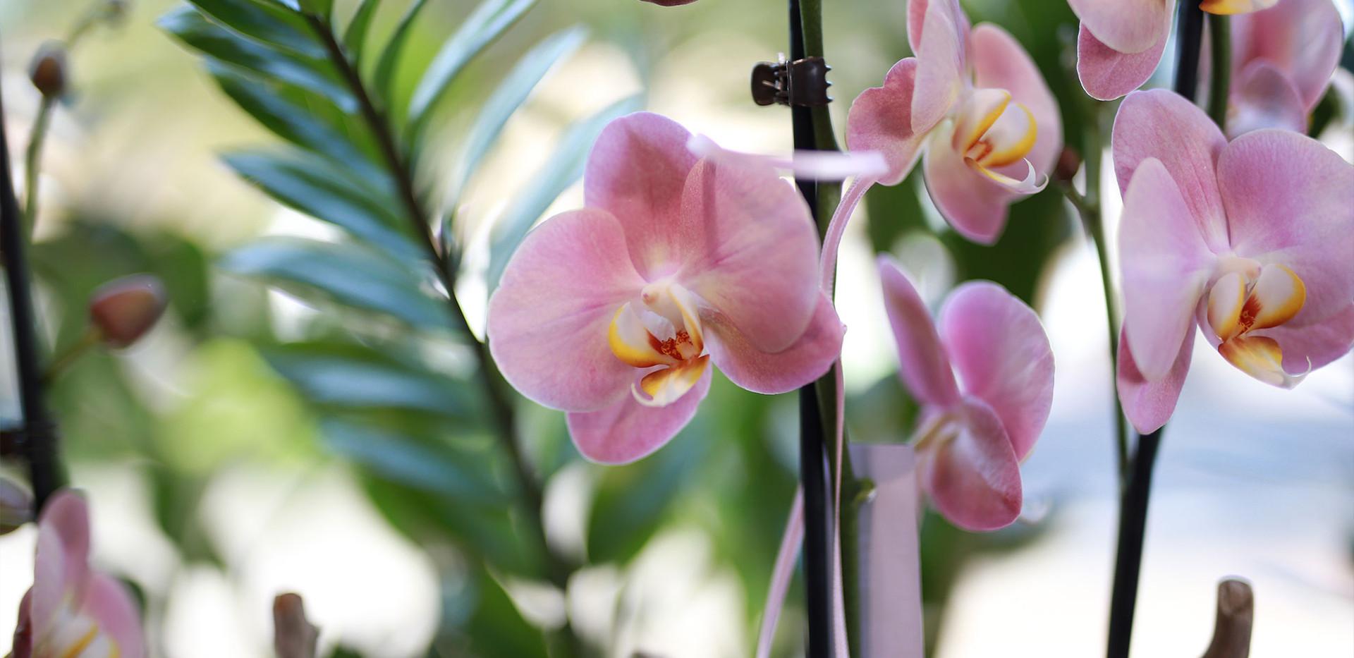 Blumenhaus-Samstagern-Magic.jpg