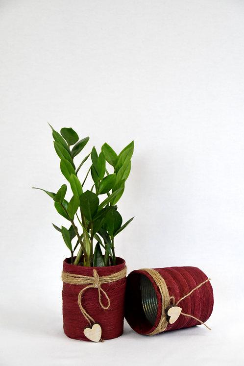 Tin'Can Plante