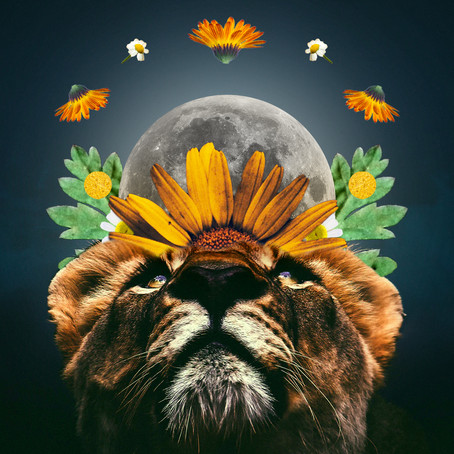 Full moon in Leo - Step into your power