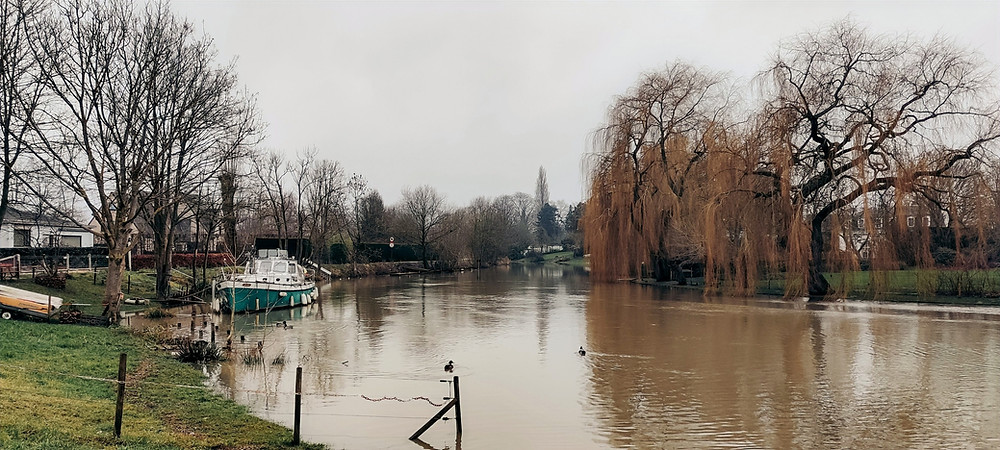 River with a boat and willow trees