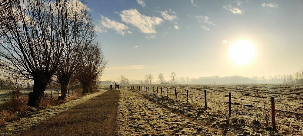 Nature reserve, morning sun