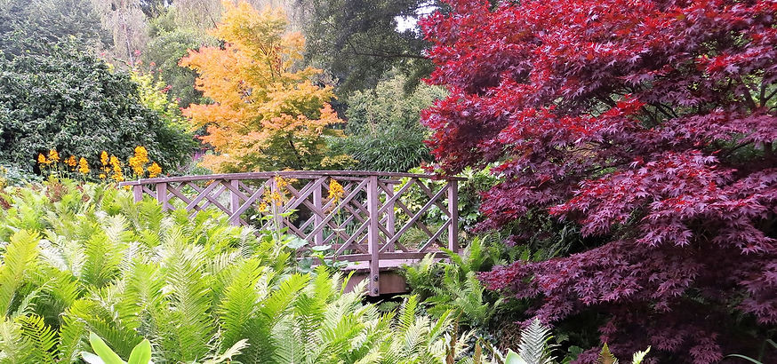 Bridge by Acer tree and ferns