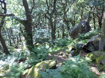 shipley glen hillside.jpg