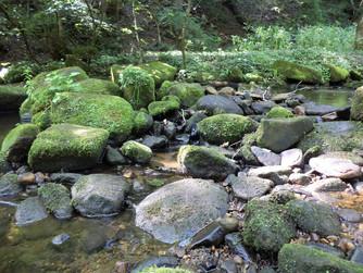 shipley glen stream bed.jpg