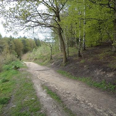 Downhill path through buck woods Thackley