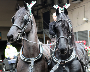Black horses Bradford parade 2019