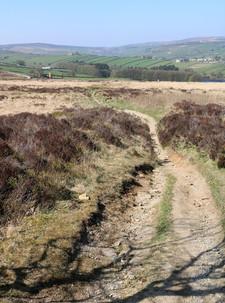 Downward path.jpg