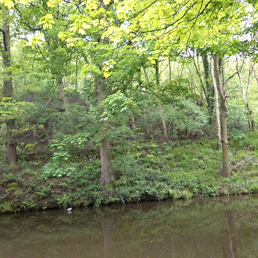 Leeds Liverpool canal and buck woods