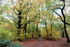 Judy woods Bradford autum trail.jpg