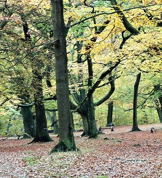 Judy woods.jpg