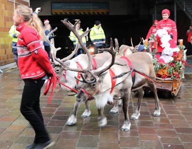 Reindeer pulls Santa parade 2019