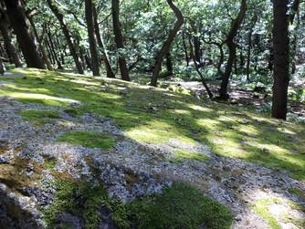 shipley glen mossy rock.jpg