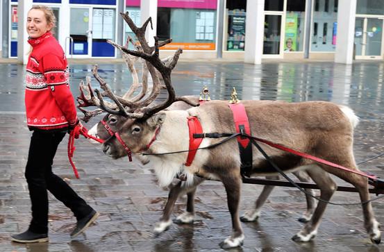 Reindeer parade Centenary Square Bradford 2019