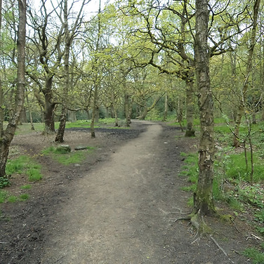 Winding path through Buck woods