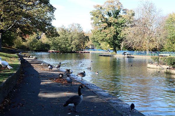 Lister park birds around lake