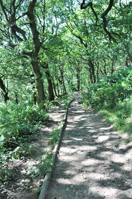 shipley glen path to stream.jpg